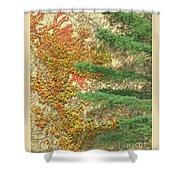Autumn Vine And Evergreen Shower Curtain