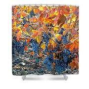 Autumn Vineyard Sunlight Shower Curtain