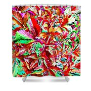 Autumn Virginia Creeper Shower Curtain