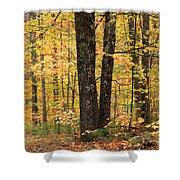 Autumn Woods 1 Shower Curtain