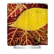 Autumn Yellow Shower Curtain