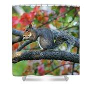 Autumnal Squirrel Shower Curtain
