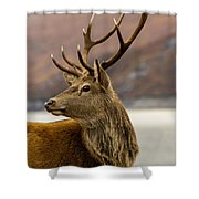 Autumnal Stag Shower Curtain