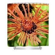Autumn's Gerber Daisy Shower Curtain
