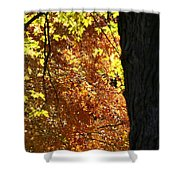 Autumn's Golds Shower Curtain