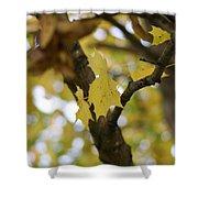 Autumn's Wondrous Colors 1 Shower Curtain