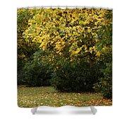 Autumn's Wondrous Colors 4 Shower Curtain