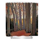 Avenue Of Plain Trees Shower Curtain