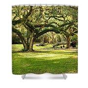 Avery Island Oaks Shower Curtain by Scott Pellegrin