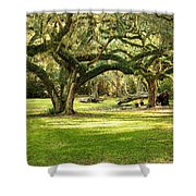 Avery Island Oaks Shower Curtain