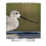 Avocet Feeding Shower Curtain