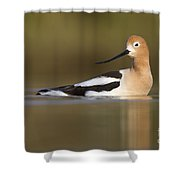 Avocet Looking Back Shower Curtain