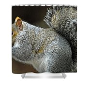 Aw Nuts Shower Curtain