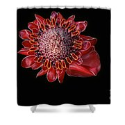 Awapuhi Ko Oko'o - Torch Ginger - Etlingera Elatior - Hawaii Shower Curtain