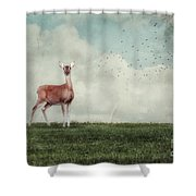 Aware Shower Curtain