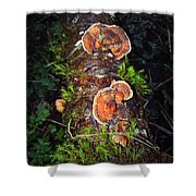 Awe Inspiring Fungi Shower Curtain