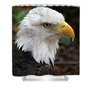 Awesome American Bald Eagle Shower Curtain
