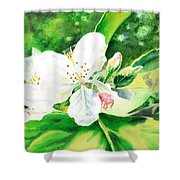 Awesome Apple Blossoms Shower Curtain