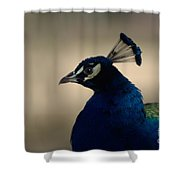 Awesome Peacock Shower Curtain