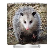 Awesome Possum Shower Curtain