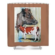 Ayrshire Cattle Shower Curtain