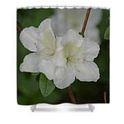 Azalea 14-2 Shower Curtain