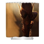 Azalea Flower Bud Sunrise - 1 Shower Curtain
