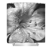 Azalea Flower With Raindrops Monochrome Shower Curtain