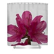 Azalea Rise Shower Curtain