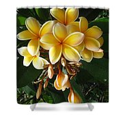 Aztec Gold Plumeria Shower Curtain