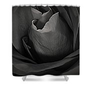 B-w Rose Shower Curtain
