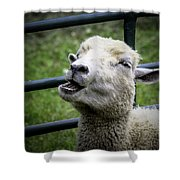 Baa Baa Black Sheep Shower Curtain