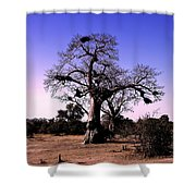 Babobab Tree Shower Curtain