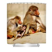 Baboon Family In The Desert Shower Curtain