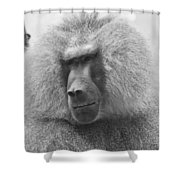 Baboon In Black And White Shower Curtain