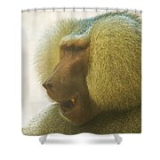 Baboon In The Sun Shower Curtain