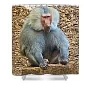 Baboon On A Stump Shower Curtain