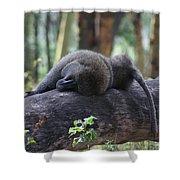 Baboon Sleeping Shower Curtain