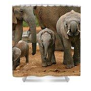 Baby African Elephants II Shower Curtain