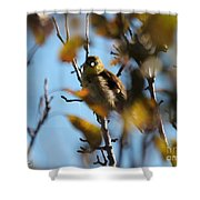 Baby American Goldfinch Learning To Fly Shower Curtain