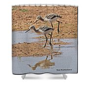 Baby Avocets At Grp Shower Curtain