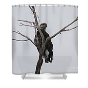 Baby Bald Eagle Shower Curtain