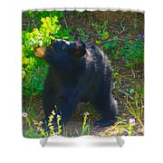 Baby Bear Cub Shower Curtain