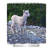 Baby Big Horn Sheep Shower Curtain