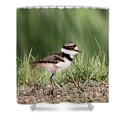 Baby - Bird - Killdeer Shower Curtain