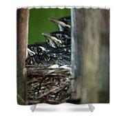 Baby Birds Shower Curtain