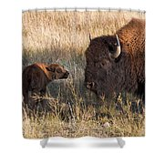 Baby Bison Meets Daddy Shower Curtain