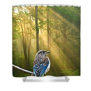 Baby Blue In Morning Fog Sunlight Shower Curtain