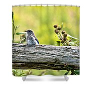 Baby Bluebird Shower Curtain