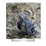 Baby Blue Jay Shower Curtain